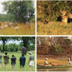 Safari in Zimbabwe