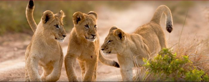 FAMILY TRIP IN SOUTH AFRICA