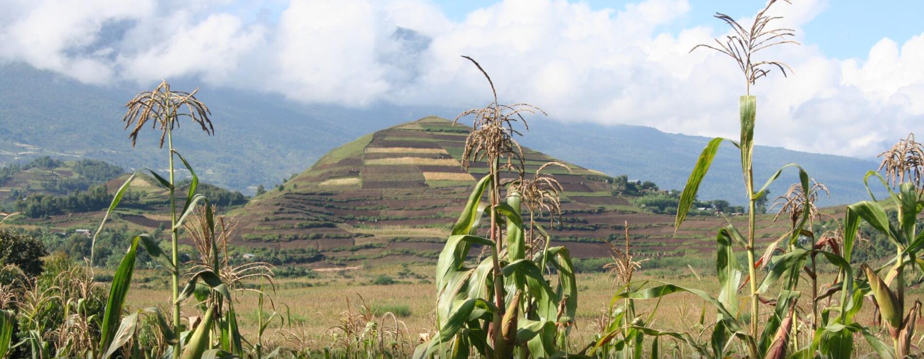 GORILLA EXPRESS SAFARI IN RWANDA AND UGANDA