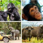 Travel in Uganda