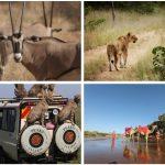 Magical Kenya and the Great Kenyan Safari
