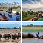 Great South African Trip