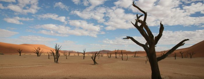 Namibia's Wildlife and Walking