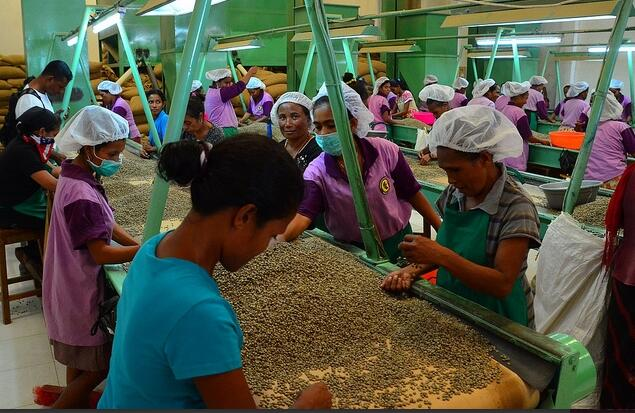 Coffee Cooperative in Dili Austronesian Expeditions