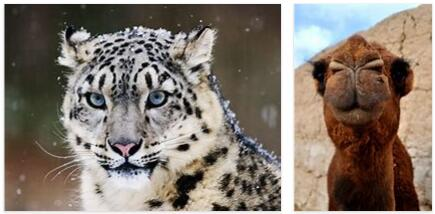 Afghanistan Animals