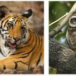 Bangladesh Wildlife and Economy