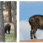 Bhutan Wildlife and Economy