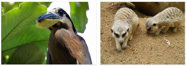 El Salvador Wildlife