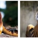 Indonesia Animals and Plants