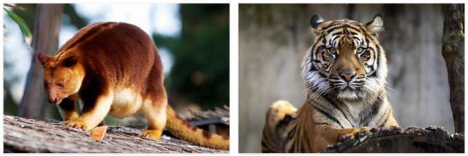 Indonesia Animals