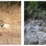 Iran Wildlife and Economy
