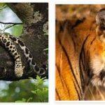 Nepal Wildlife and Economy