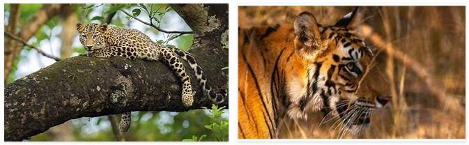 Nepal Wildlife