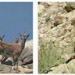 Pakistan Wildlife and Economy