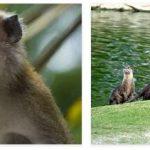 Singapore Wildlife and Economy