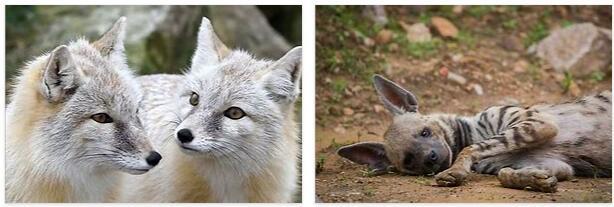 Turkmenistan Animals