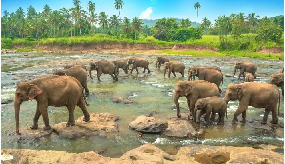 Best Travel Time and Climate for Sri Lanka